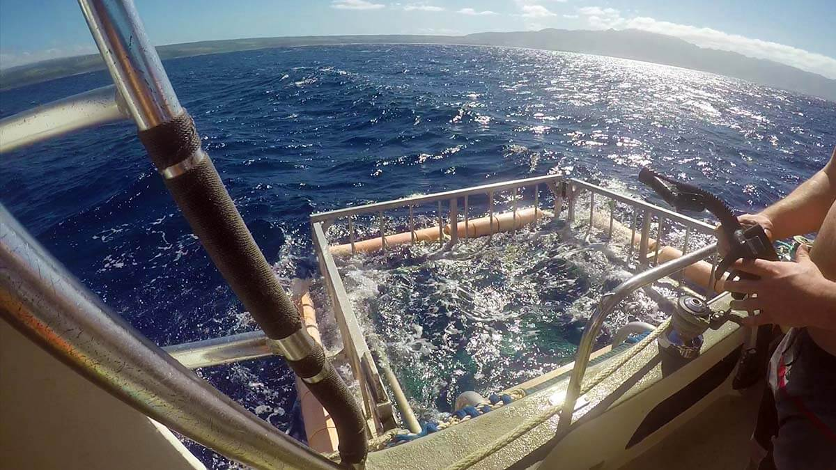 A shark cage view at Hawaii Shark Encounters tour Top things to do in Hawaii