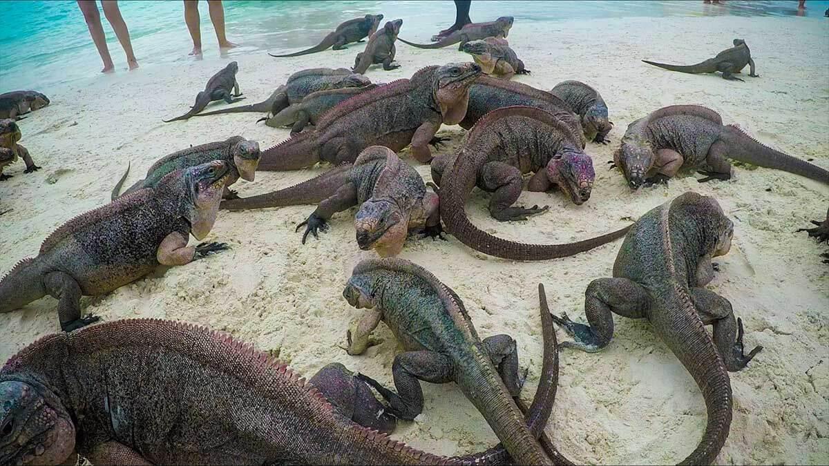 Iguana Island group shot Things to do in Exuma