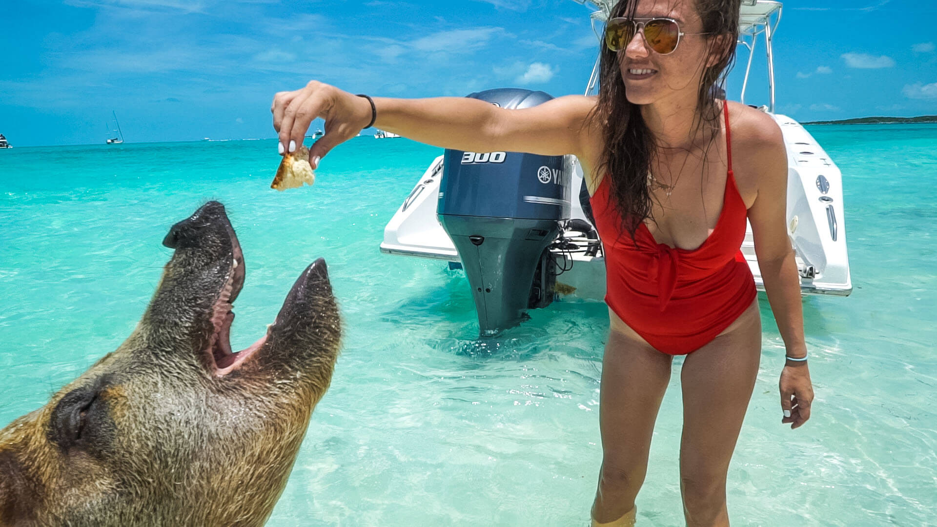 Kristin of Vacation Couple in a red bathing suit feeding an adult pig on Pig Beach in the Bahamas which is one of the best things to do in the bahamas