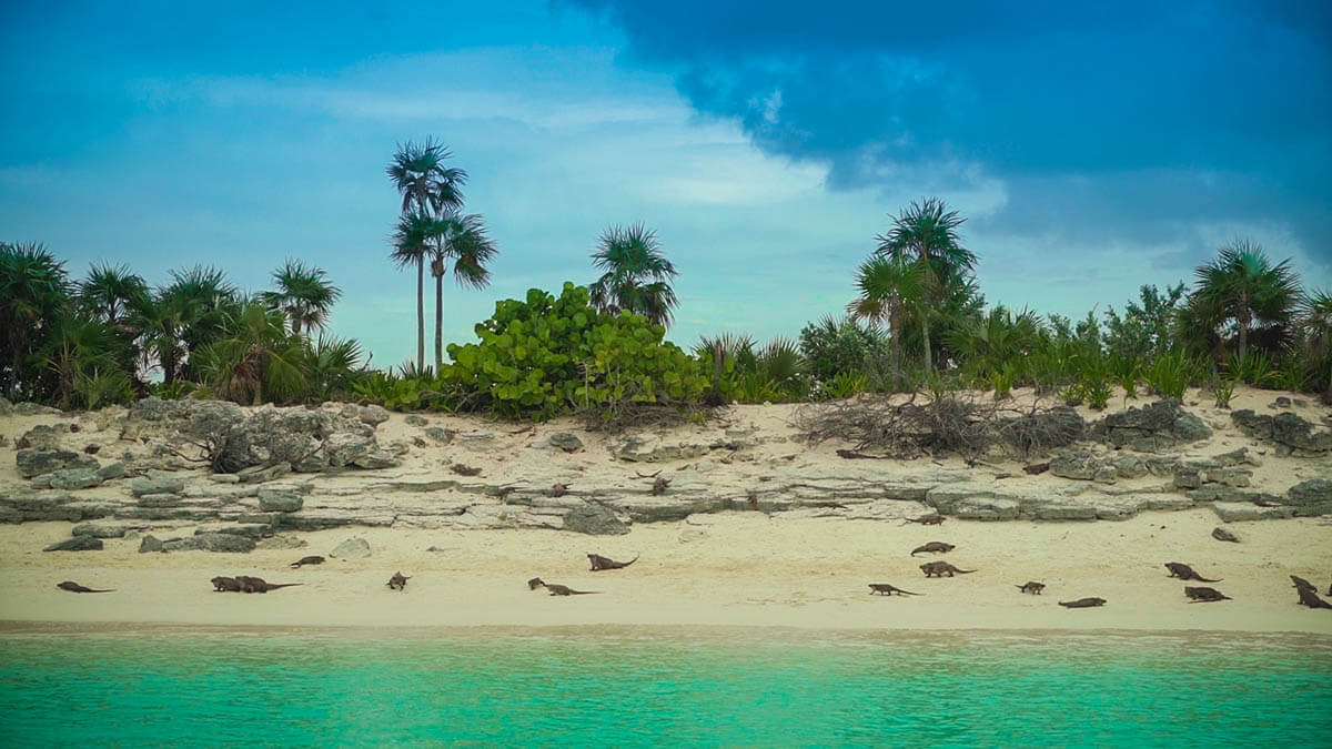 iguana beach shot things to do in exuma allen Cay Leaf Cay
